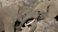 eBay Partners With the International Fund for Animal Welfare in Honor of its 10-Year Anniversary on the Global Ban of Ivory Sales