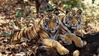 eBay Celebrates Global Tiger Day with World Wildlife Fund