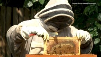 Retail Revival Spotlight: Urban Beekeeping